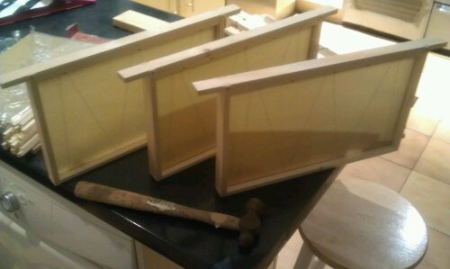 Three complete brood frames for a national bee hive