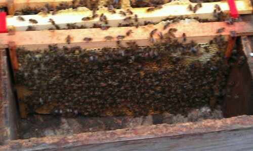 Bee's on frame